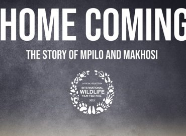 Coming Home Film Poster Header